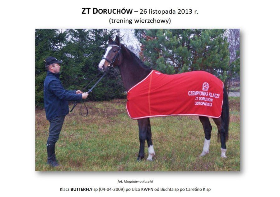ZT DORUCHÓW (trening wierzchowy) – 26 listopada 2013 r.